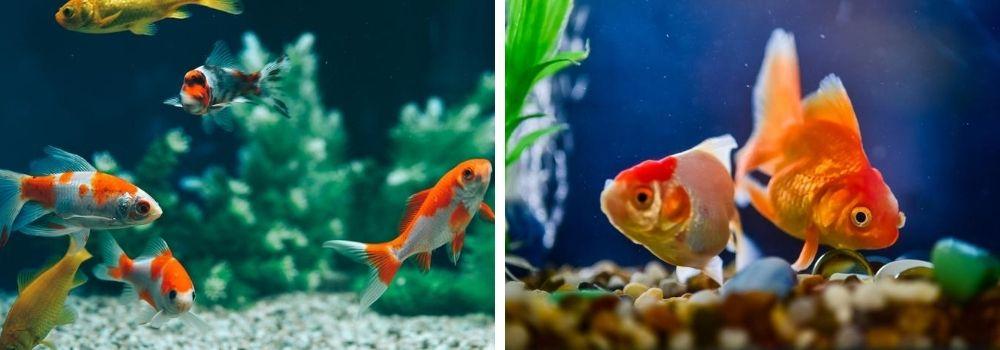 aquarium-kopen-dierenwinkel