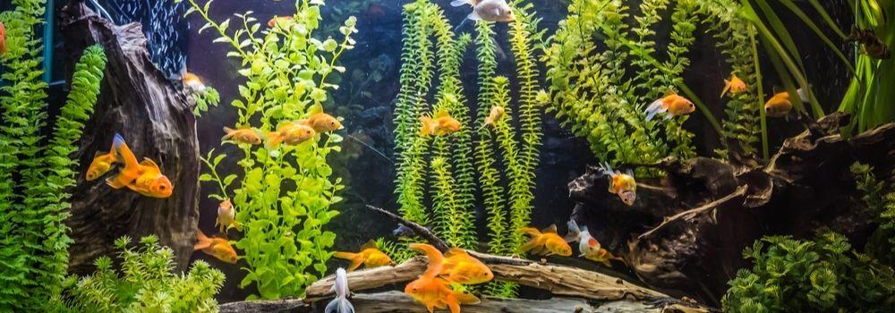 aquarium-bestellen-online